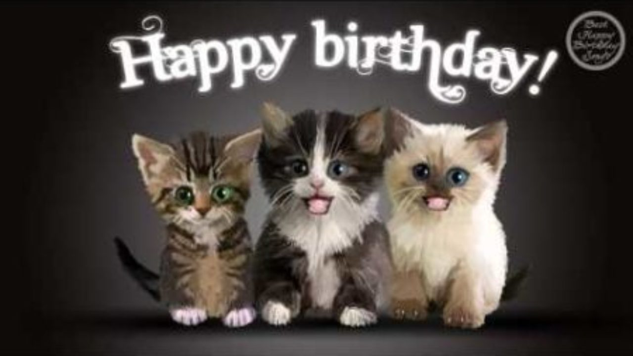 Cat Memes – Happy Birthday Cat Memes – Funny Cat Memes & Pictures |