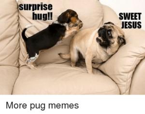 pug memes